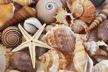 Seashells Ans Sea Star As Back...