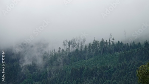 Fototapeten Wald rainy day with fog in the forest on the mountains