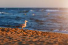 Seagull On A Sandy Beach In Th...