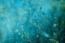 Soft Turquoise Background With Grassy Plants, Sprays And Flares