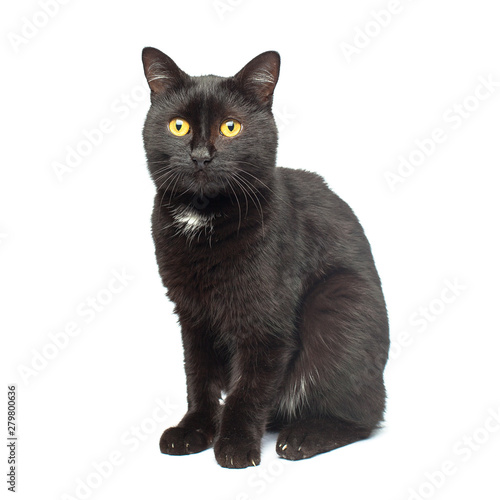 Black Cat sitting and looking at the camera, isolated on white Wall mural