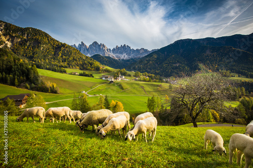 Dolomites mountain scenery with grazing sheep, Val di Funes, South Tyrol Fototapet