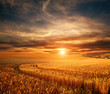 canvas print picture Impressive dramatic sunset over field of ripe wheat, colorful clouds in sky, crop season agricultures grain harvest