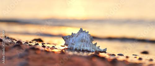 Tuinposter Noordzee große Muschel an der Küste