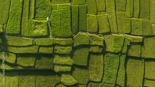 Photo Stands Rice fields Abstract geometric shapes of agricultural parcels in green color..Bali rice fields. Aerial view shoot from drone directly above field.