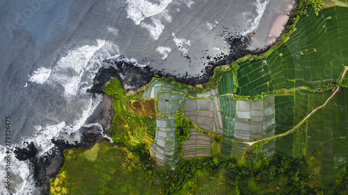 Garden Poster Rice fields Aerial view of scenery rice terraces on ocean coast in Bali, Indonesia
