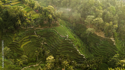 La pose en embrasure Les champs de riz Tegallalang Rice Terraces in Bali. Aerial view from above in the morning