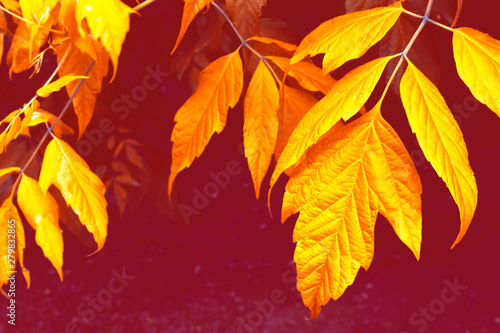 Spoed Foto op Canvas Bordeaux autumn landscape with bright colorful foliage. Indian summer.