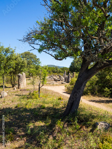Photo Menhirs and Tree
