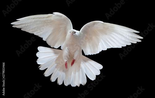 Fényképezés  Flying white doves on a black background