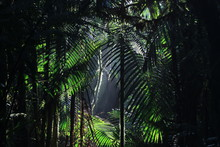 A Background Of Tropical Rainforest With Sun Rays Coming In From Above Highlighting Many Palm Leaves