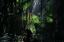 A Wallpaper Of Tropical Rainforest With Sun Rays Coming In From Above