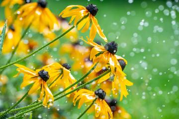 watering flower in the gard...