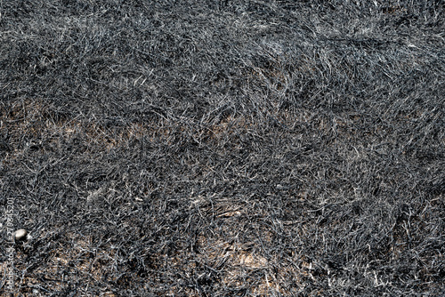 Photo  Black soot left by fire on the ground after a prescribed wildfire that burned fi