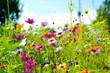 Leinwandbild Motiv Blumenwiese - Hintergrund Blumen Wiese Wildblumen