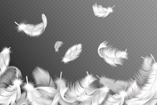 White Feathers Background. Fal...