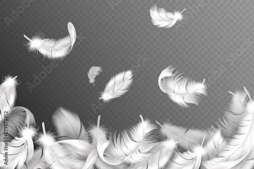 Papel de parede White feathers background