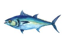 Watercolor Tuna Fish Isolated ...