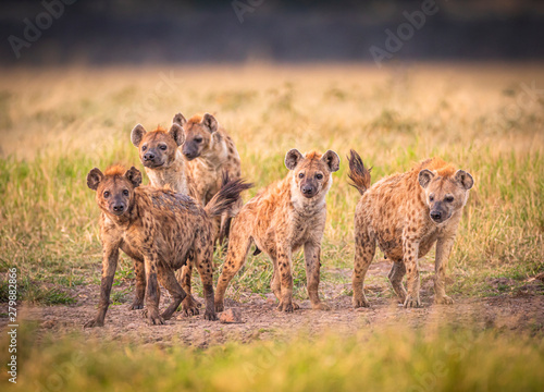 Deurstickers Hyena Clan of Hyenas