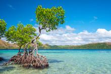 CYC Island, Coron, Palawan, Ph...