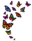 butterflies set isolated on a white