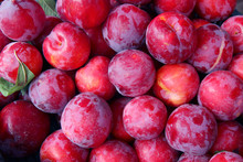 Organic Red Plums Fruit In Local Farmers Market.