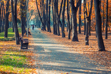 Beautiful Scenic Early Autumn Alley With Benches Between Trees And Golden Colored Foliage Lush At City Park. Walking Path In Colorful Fall Season Park