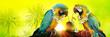 canvas print picture - Papageien im Urlaub am Strand in den Flitterwochen