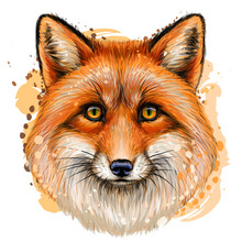Fox. Sketchy, Color Portrait Of  Fox With Red Fur On A White Background With A Spray Of Watercolor