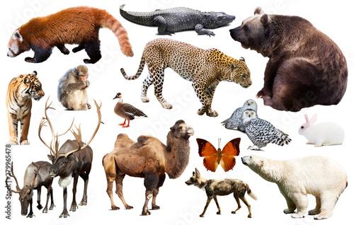 Foto op Plexiglas Krokodil asia animals isolated