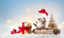 Christmas Festive Composition ...