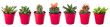Different succulents in pots on white background