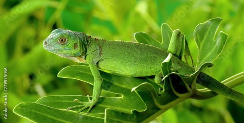 Papiers peints Cameleon chameleon on leaf