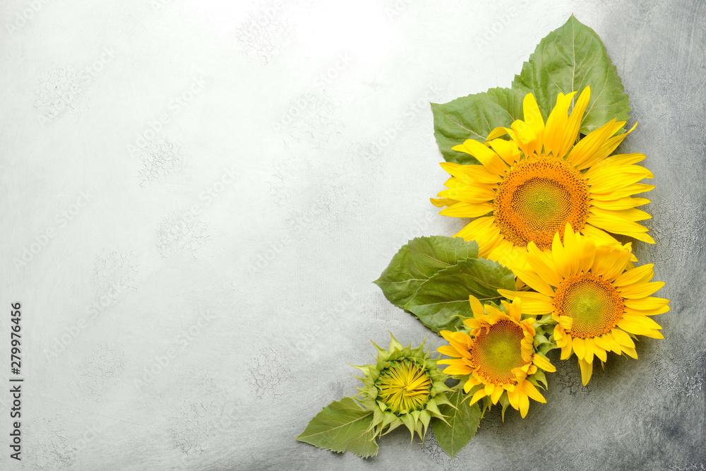 Fototapety, obrazy: Beautiful sunflowers on light background