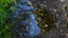 Pfütze Im Wald Spiegelt Die Baumkronen