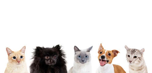 Collage of domestic animals...