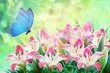 Leinwanddruck Bild Floral summer natural landscape with  pink lilies flowers  and fluttering butterflies on soft green background. Dreamy gentle wonder air artistic image. Summer template, artistic image, free space