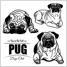 Pug - Vector Set Isolated Illustration On White Background