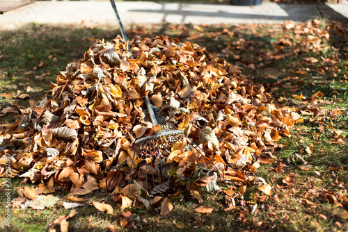 Pile of fallen autumn leaves in the yard