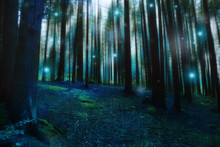 Magic Surreal Forest Landscape, Dark Gloomy Fairytale Forest With Fireflies And Lights, Mysterious Moody Dreamy Forest