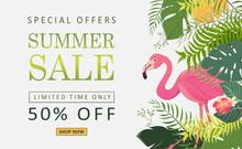 Flamingo Bird Illustrations For Summer Price Sale