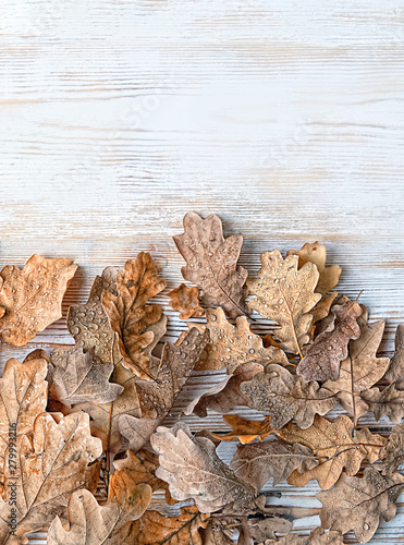 Fotomural autumn oak leaves on white rustic wooden background