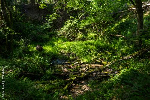 Strumyk strumień źródło wody rezerwat rzeki stążki las lato - fototapety na wymiar