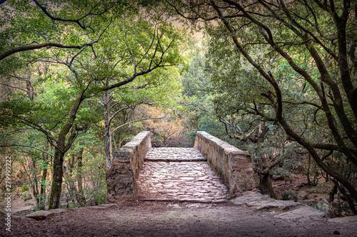 Spoed Foto op Canvas Weg in bos steinbrücke