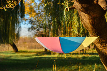 An Open Multicolored Umbrella Hanging On A Tree Inverted In A Park In The Fall Among Yellow Foliage And Trees.