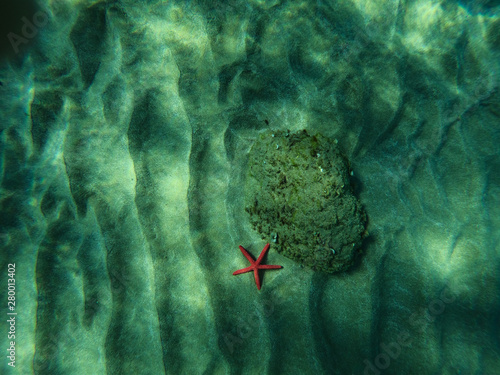 Photo Underwater view of a red starfish at the sandy and rocky bottom of the sea