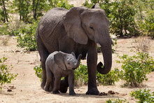 Elephant And Baby Elephant At ...