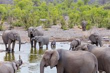 Elephants In Waterhole At Etos...