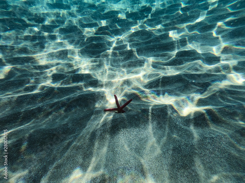 Papiers peints Nature Underwater view of a red starfish at the sandy and rocky bottom of the sea.