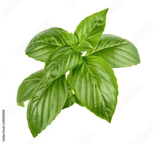 Green basil leaves Canvas Print